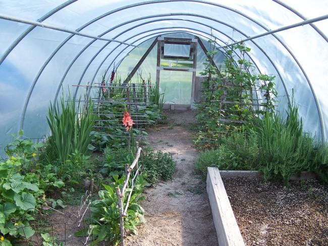 herb hoop house