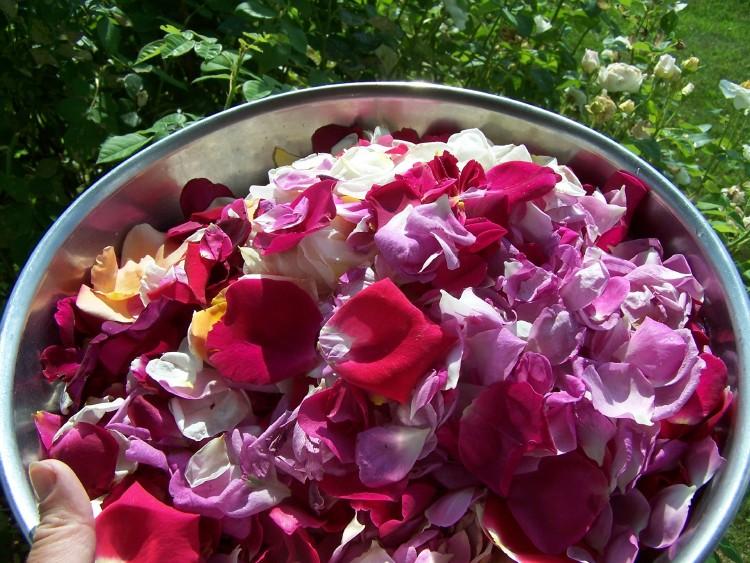 rosepetalsbowl