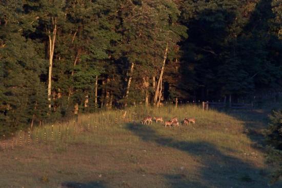 Deer at Meduseld