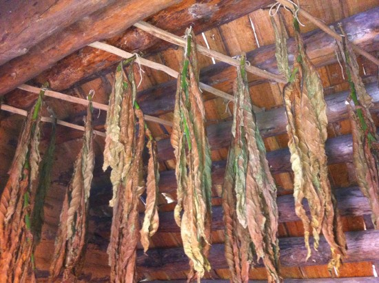 Tobacco Drying in Settlement Home