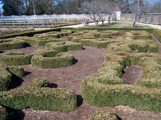 Elaborate Boxwood Garden at Mount Vernon