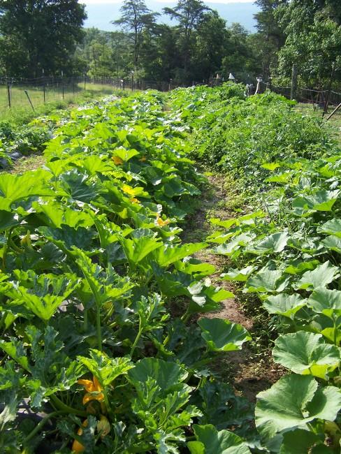 june row garden